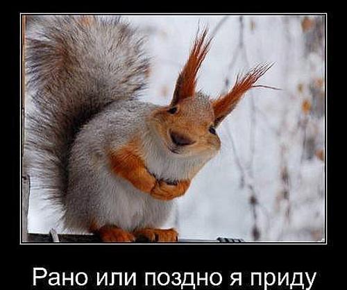 Самые лучшие смешные анекдоты про животных