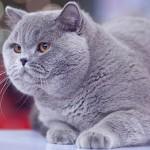 Плюшевые коты — фото