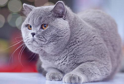 Плюшевые коты - фото