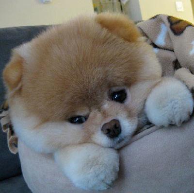 Прикольные собачки - фото