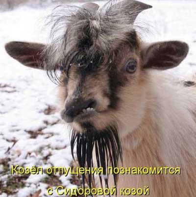 Самые ржачные приколы про животных