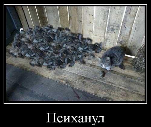 Психанул - демотиваторы