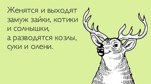 Смешные цитаты со смыслом