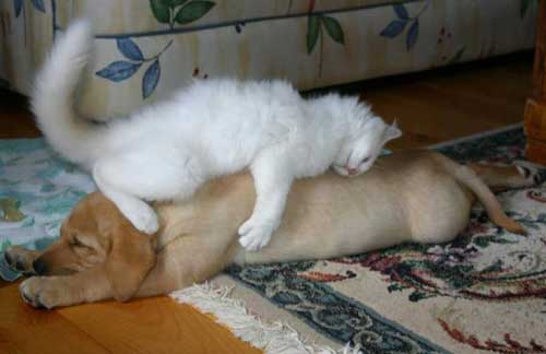 Картинки животных кошек и собак