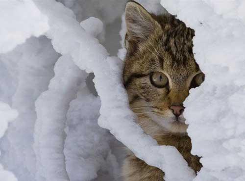 Коты зимой - фото