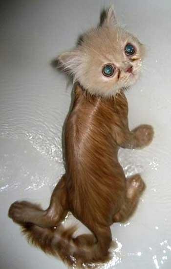 Мокрые коты - фото