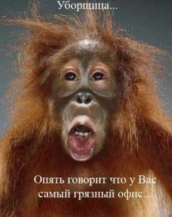 про обезьян юмор