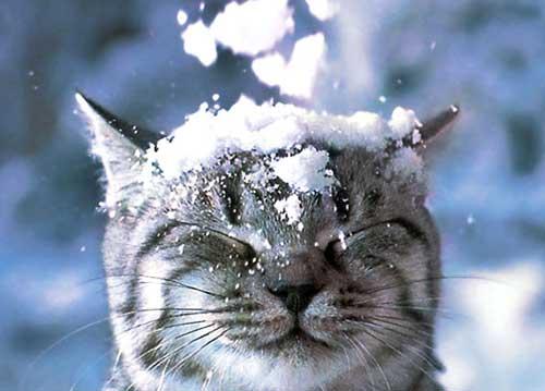 Прикольные статусы про снег
