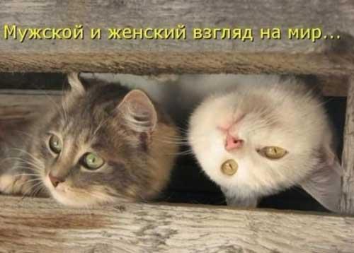 Забавные животные - фото