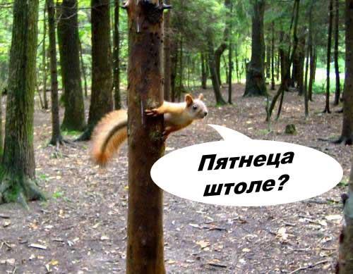 Кот В Военкомате