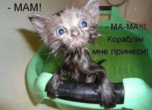 Смешные фотки животных