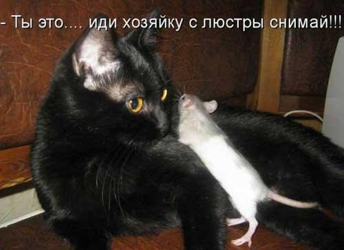 Животные - фото приколы с надписями