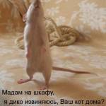 Животные — фото приколы с надписями
