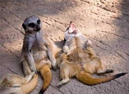Самые смешные звери - фото