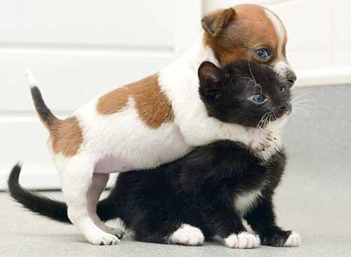 Смешные котята и щенки