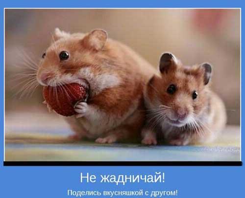 Мотиваторы про дружбу