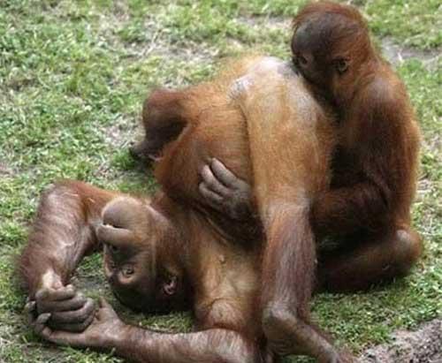 Смешные обезьянки