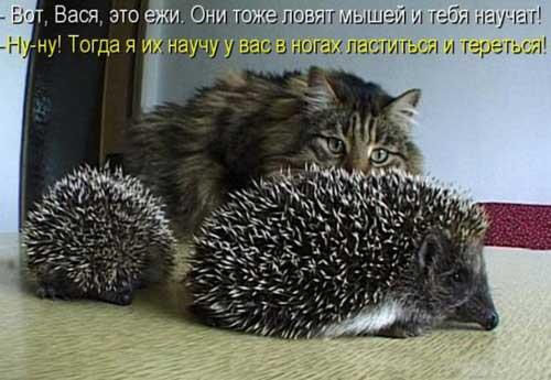 Прикольные фотки животных с надписями