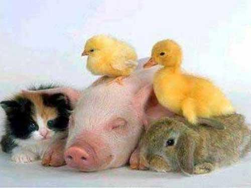 Животные друзья - фото