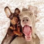 Животные друзья — фото